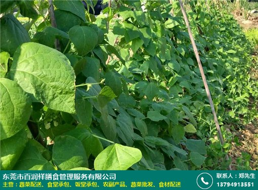 莞城工厂饭堂蔬菜配送批发的图片