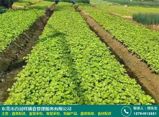 茶山酒楼蔬菜配送方案的图片