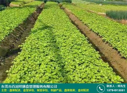 深圳餐厅蔬菜配送供应的图片