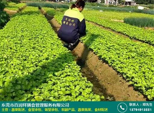 横沥餐厅蔬菜配送方案的图片