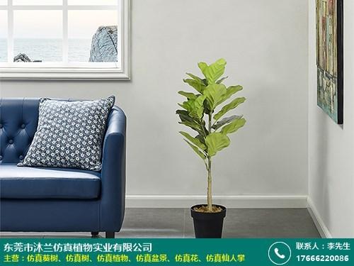 东莞仿真琴叶榕树制造厂的图片