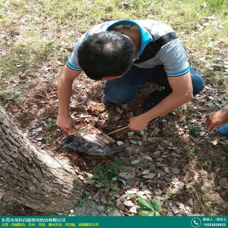 工地灭白蚁防治的图片