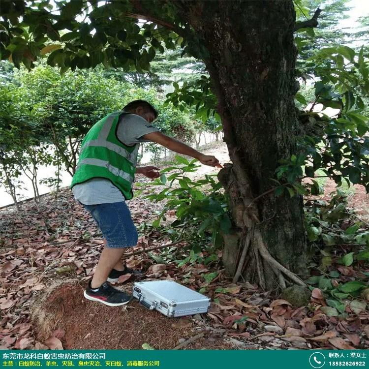 白蚁防治的图片