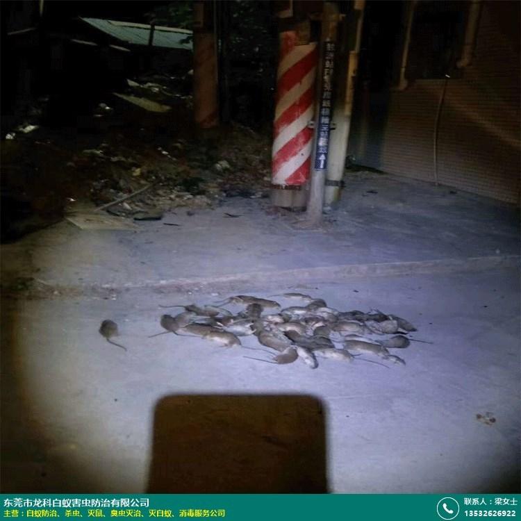 博罗企业灭鼠机构的图片